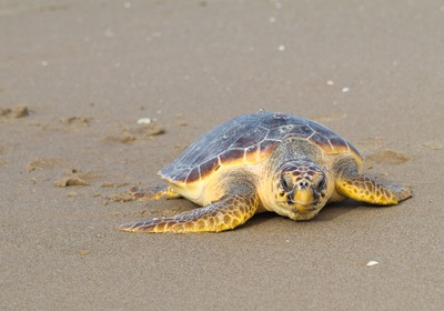 Get to Know Ponce Inlet Wildlife