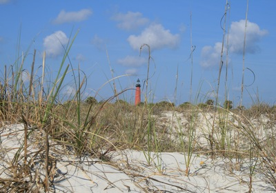 Discover Ponce Inlet's Wild Side